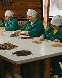 Как производятся наши кедровые продукты