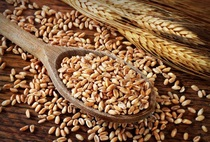 Полба зерно (экологическая) Био без Гмо 450г.