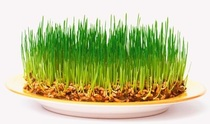 Пшеница зерно 450г.