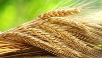 Рожь зерно Био без Гмо 450г.